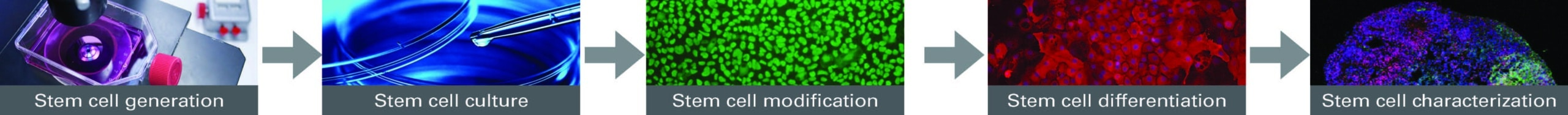 Stem Cell research workflow
